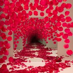 red_petals_web